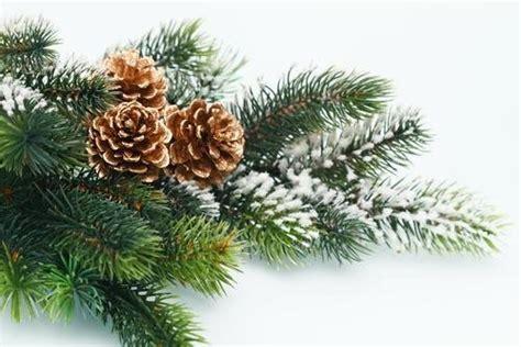 wie h 228 lt man einen weihnachtsbaum l 228 nger frisch asklubo com
