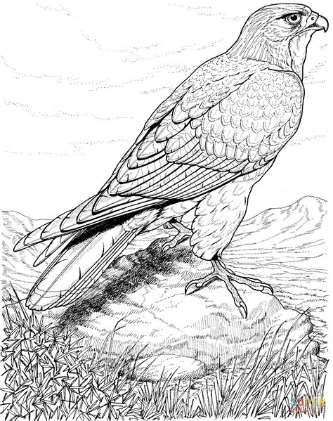 hawk coloring page free printable coloring pages