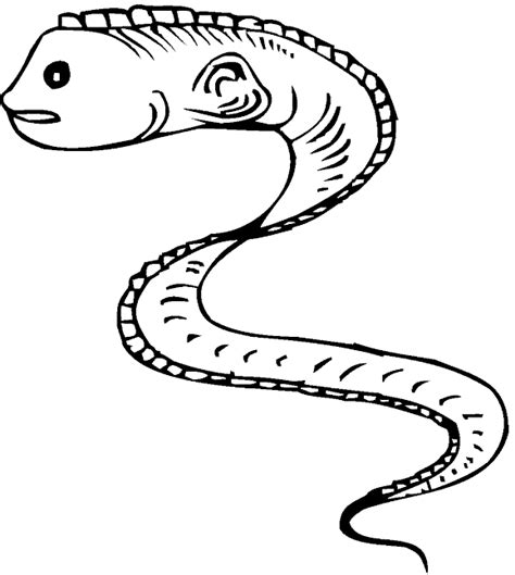 eel printable coloring pages