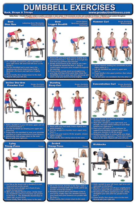dumbbell exercises diagrams dumbbell posters for the home dumbbell poster pack