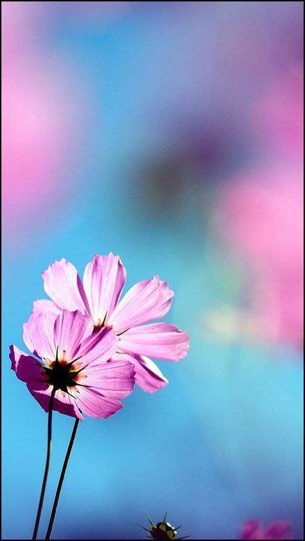 imagenes flores para whatsapp 1000 ideas sobre fondos bonitos para whatsapp en