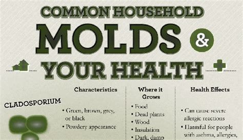 What Is The Difference Between And Showers by Difference Between Mold And Mildew Hrfnd