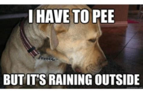 Dog Problems Meme - post pictures like these 21k reps bodybuilding com forums
