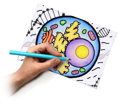coloring book app project quiver education quiver 3d augmented reality coloring apps