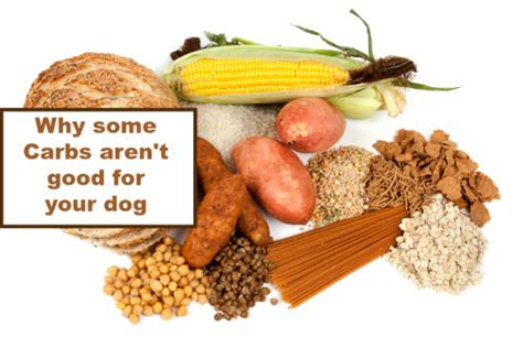 how many carbs in dogs why carbohydrates are bad for dogs slimdoggy