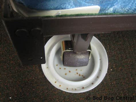 bed bug interceptor diy bed bugs 101 early detection tools methods bedbug
