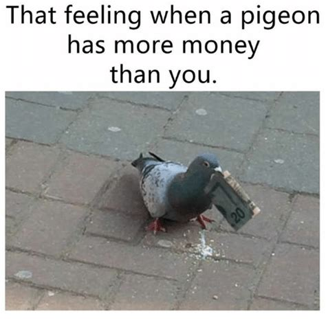 Has More Money Than You that feeling when a pigeon has more money than you