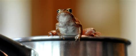 the frog 2 see how they grow ebook the frog in very hot water a fable about debt