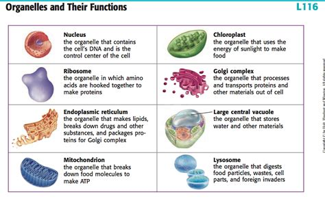 organelles and their functions front yard landscaping ideas