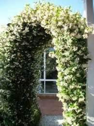 Arch Vs Sanaa S White Garden Arch Vs Sanaa S White Garden 28 Images Large White