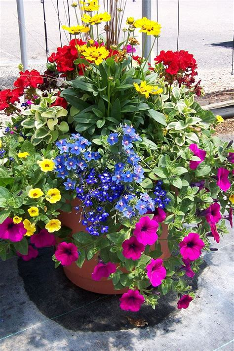 Container Flower Gardens 25 Best Ideas About Container Flowers On Container Plants Potted Plants Patio And