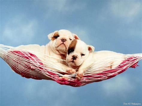 puppy hammock puppy hammock domestic animals wallpaper 2585372 fanpop