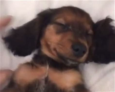 jenner puppy jenner s new puppy wins at the nap is infinitely adorable