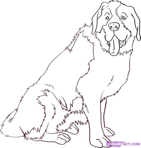 beethoven dog coloring page how to draw a saint bernard step by step pets animals