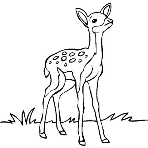 cartoon deer coloring pages baby deer coloring pages coloringstar