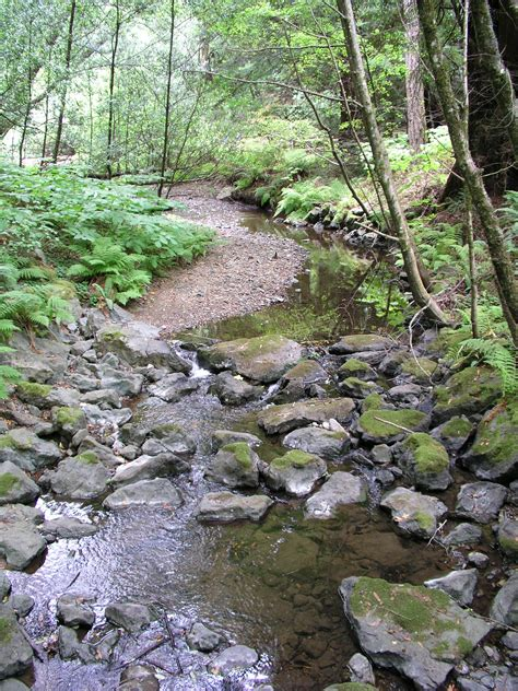 Backyard Fly Control File Stream In The Redwoods Jpg Wikimedia Commons