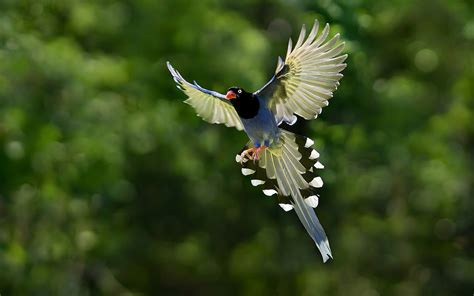 Nature Animal Bird National Geographic Hd Wallpapers Beautiful Bird Flying
