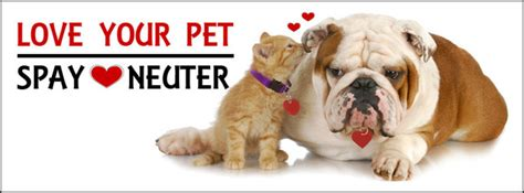 when can i neuter my puppy spay neuter about pets inc