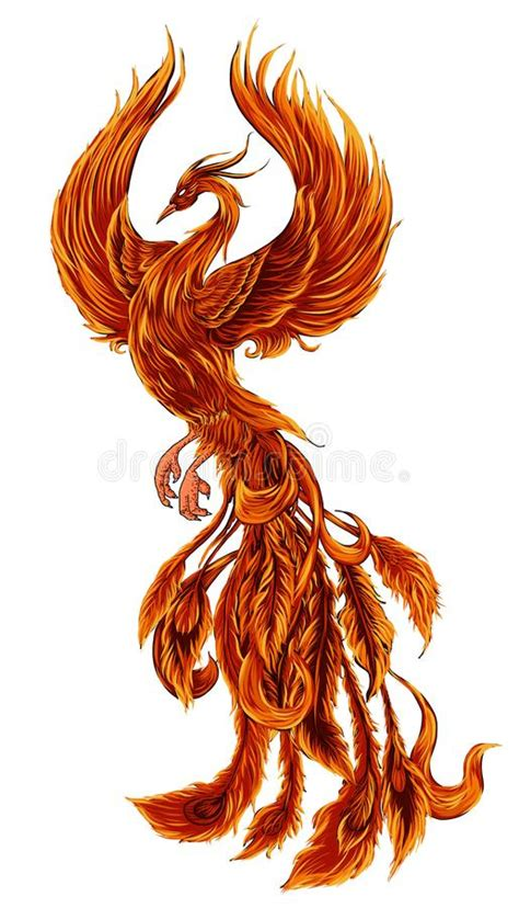 phoenix fire bird illustration and character design hand