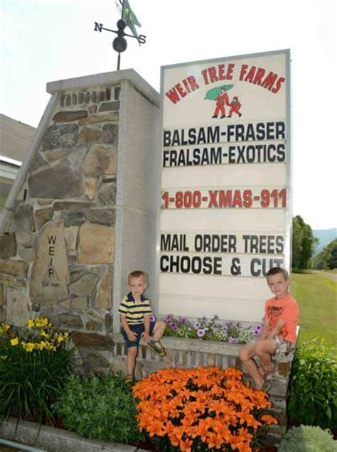 weir tree farms colebrook new hshire balsam fraser