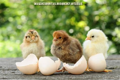 Imagenes De Animales Lindos | im 193 genes de animales 174 tiernos y bonitos 101 fotos