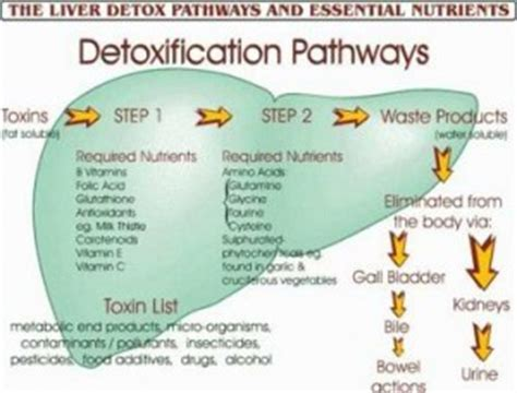 Detox All Organs by 187 Where Is The Liver Located