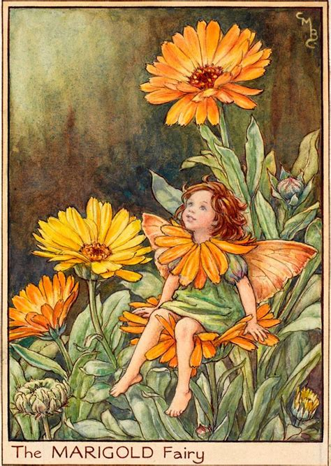 Flower Fairies Of The Garden The Marigold Flower Fairies