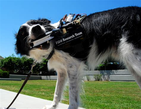 new technology for dogs the fido project wearable technology for service dogs