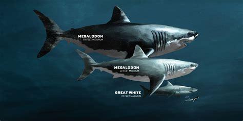 imagenes reales de un megalodon megalod 243 n el terror de los oc 233 anos noticias taringa