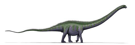 Feet To Meters by File Supersaurus Dinosaur Png Wikimedia Commons