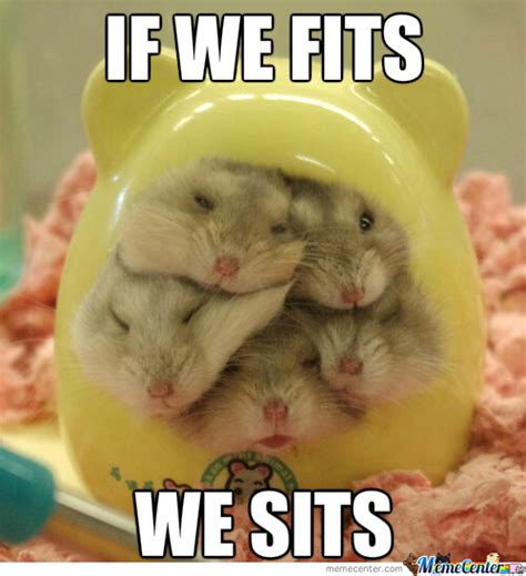 Hamster Meme - hamster memes best collection of funny hamster pictures