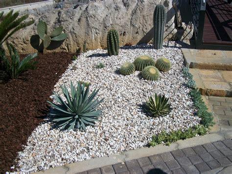 piante grasse in giardino giardini con sassi e piante grasse