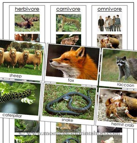 images  herbivores carnivoresomnivores  pinterest kids corner baboon  teeth