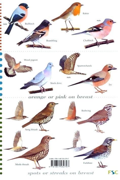identifying backyard birds backyard bird finder garden backyard bird identification