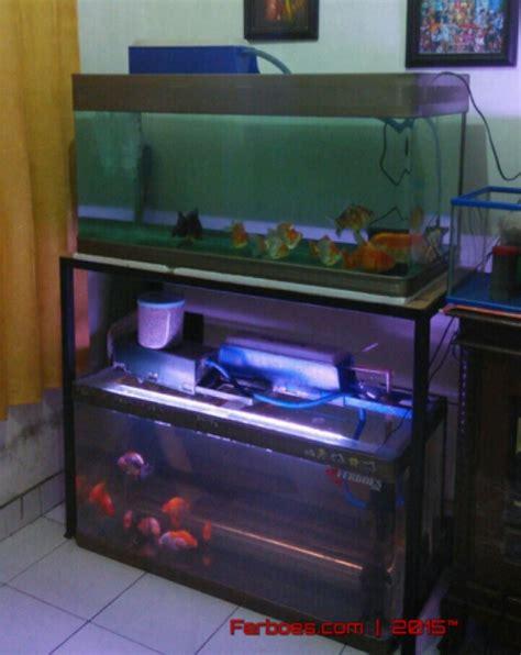 cara membuat filter aquarium arwana rumah sempit tapi ingin tambah aquarium ini solusinya