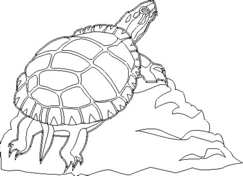 coloring page painted turtle north carolina symbols colouring pages page 2