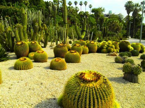imagenes de jardines con cactus jardines de cactus fotos de naturaleza