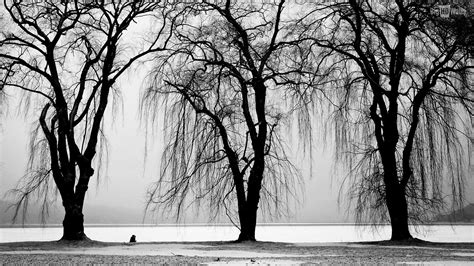 black winter black and white wallpapers high resolution gallery