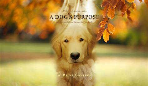 trailer for a s purpose a s purpose quot new official trailer quot and tv reviews
