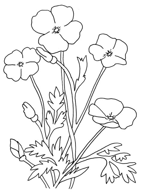 Blank Poppy Flowers Coloring Sheets Decoloring Az Blank Coloring Book Pages