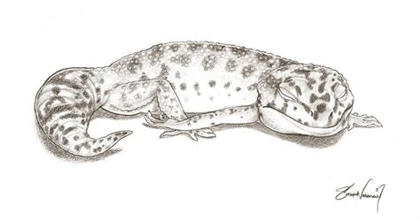 leopard gecko coloring download leopard gecko coloring