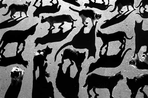 famous pattern photography shadow photography alexey bednij 2