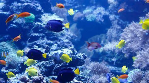 Im Wasser by Tiere Im Wasser Aquarien Tiere Im Wasser Natur