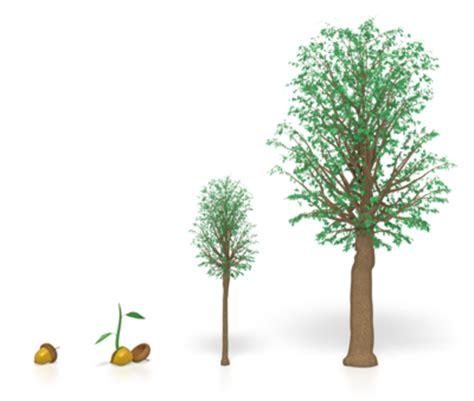 grow tree tree growth tax april 1 deadline boomsmaonline