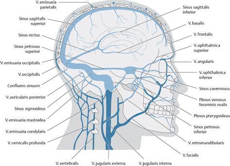 innere thrombose ven 246 ser abfluss des gehirns via medici