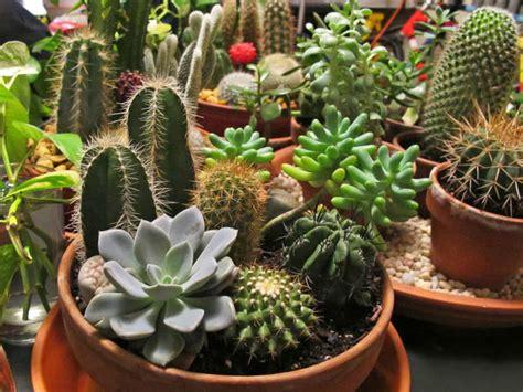 plant  cactus  succulent garden video world