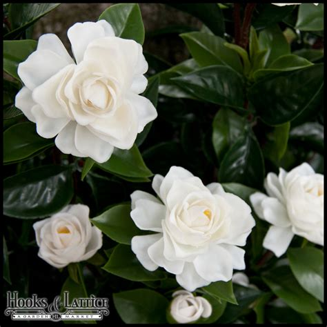 gardenia flowers artificial gardenias for outdoor use silk gardenia