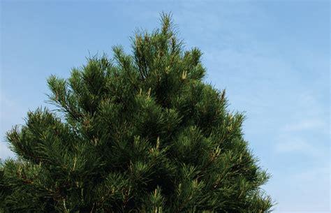memories trim the christmas tree