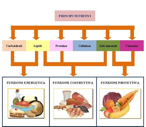 tabella alimentazione organismo umano e alimenti