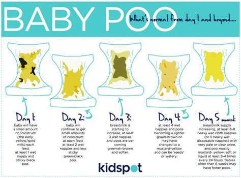 Baby Stool Colors by What You Should About Baby Poo Kidspot